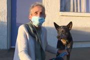 Похищенная угонщиками собака через две недели вернулась домой