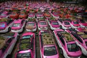 Крыши такси превратили в овощные грядки (фото)
